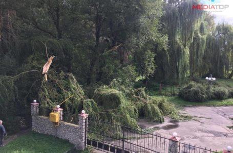 Буревій на Тернопільщині: негода пообривала дроти і повалила дерева
