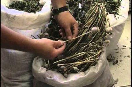 На Тернопільщинці правоохоронці вилучили десять кілограм макової соломки