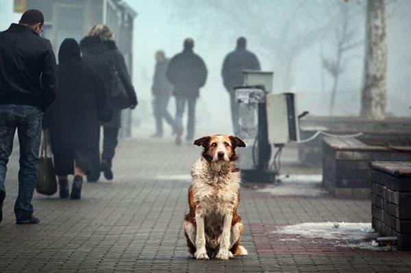 У Збаражі пропонують півтори тисячі гривень кожному, хто прийме безпритульного собаку