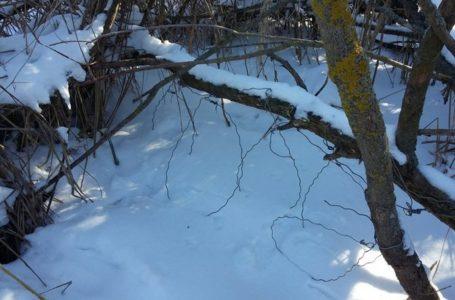 У Підволочиському районі єгерів підозрюють у пособництві браконьєрам