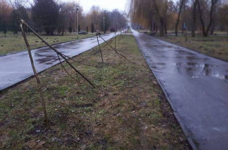 За зламані у Тернополі дерева зловмиснику загрожує тюрма