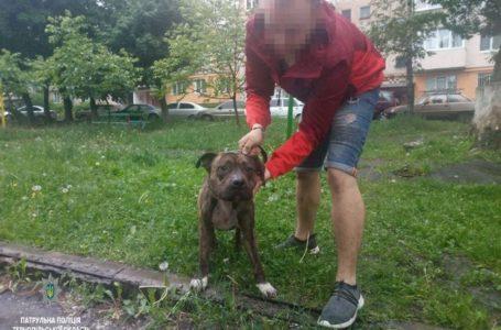 У Тернополі господар бійцівської собаки сплатить штраф