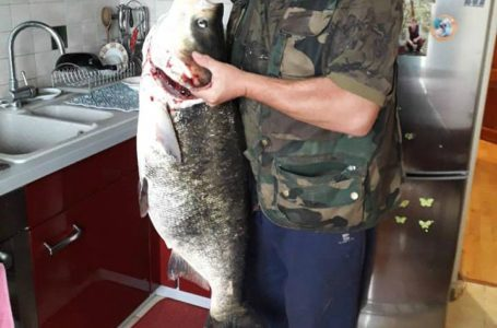 На Тернопільщині спіймали гігантську рибину