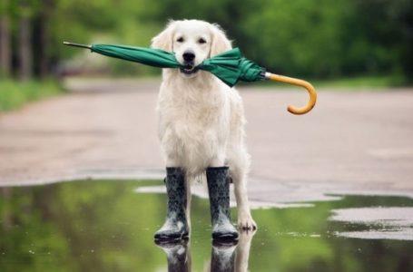 «На Тернопільщині цілий тиждень дощитиме», – метеорологи