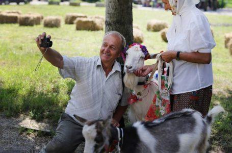 Рогаті моделі: на Тернопільщині дефілювали вбрані у спідниці кози (Фото)