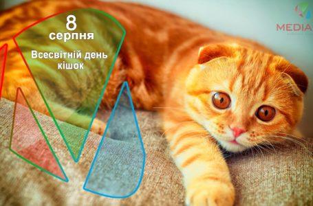 8 серпня – Всесвітній день кішок