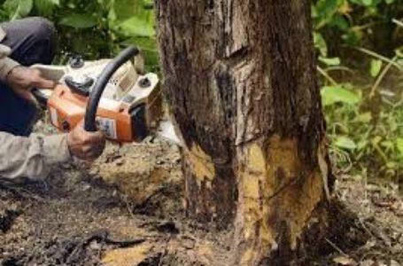 На Тернопільщині чоловіка вбило дерево, яке він зрізав