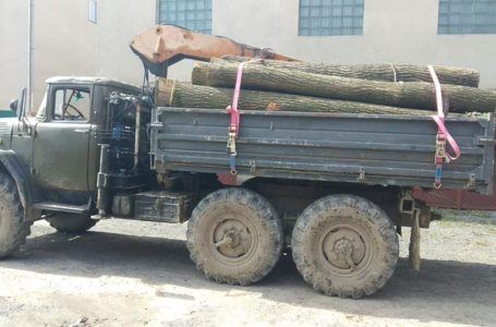 """На Монастирищині затримали вантажівку з дубами, які вивозили як """"дрова"""""""