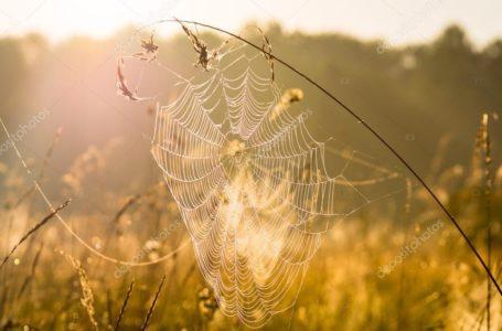 На Тернопільщині передбачають перше бабине літо