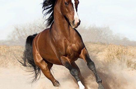 На Тернопільщині коні до смерті забили пенсіонерку
