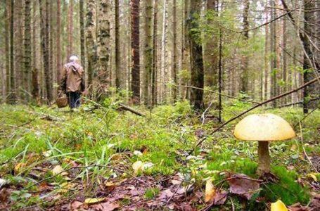 На Тернопільщині чоловік знайшов у лісі мертвих маму і брата