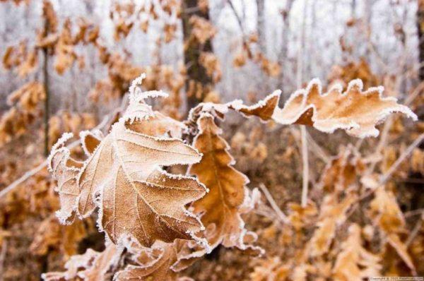 На Тернопільщину сунуть холоди