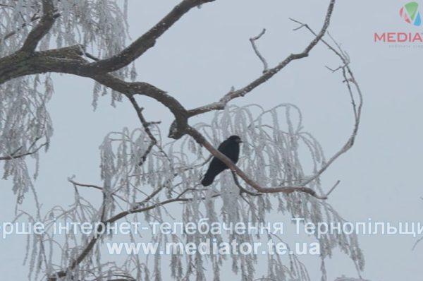 На Тернопільщині передбачають ожеледицю і дощі зі снігом