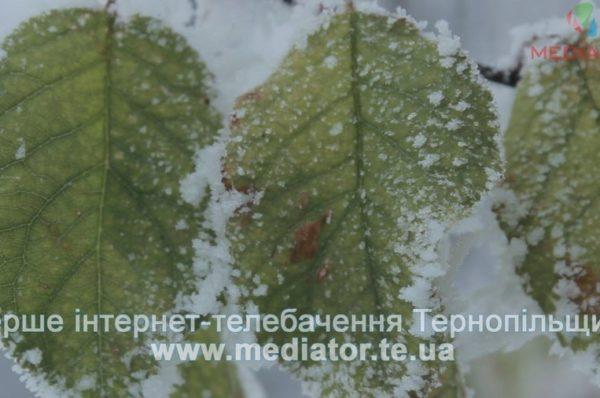 На Тернопільщині передбачають дуже складні погодні умови