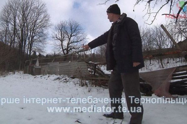 Боротьба з вовком. На Тернопільщині мисливці полюють на хижаків, бо ті нападають на людей (Відео)