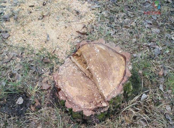 Тернополяни просять не зрубувати живі дерева (Фото)