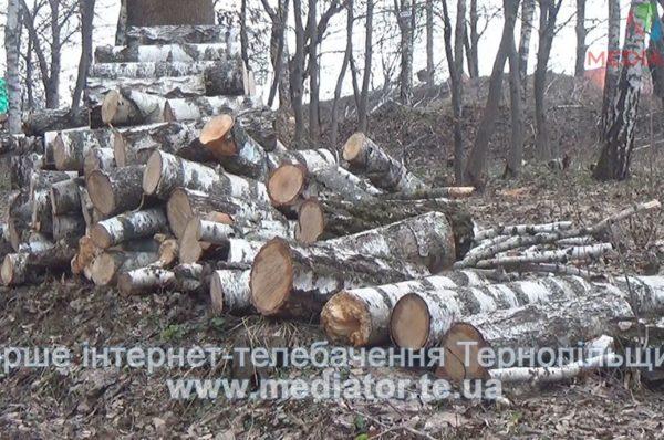 Тернополяни б'ють на сполох, бо у парках зрубують дерева (Відео)