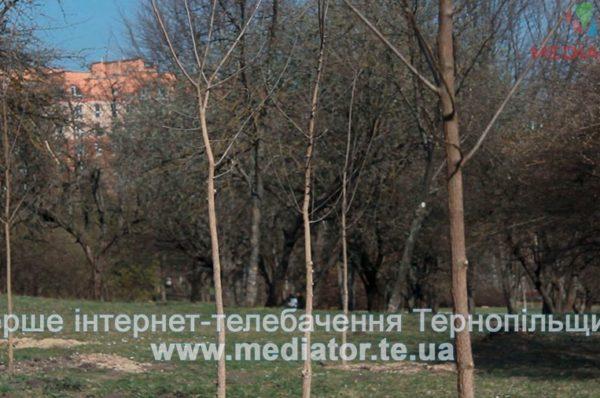 У тернопільському парку, на місця зрубаних беріз, висадили тисячу саджанців (Відео)