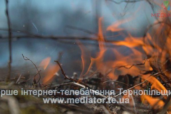 У Великій Березовиці неподалік будинків горить очерет  (Відео)