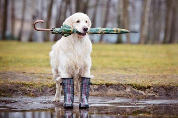 Зливи та грози передбачають синоптики цими вихідними на Тернопільщині