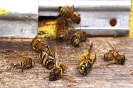На Шумщині селяни звинувачують агрофірму у масовому отруєнні бджіл