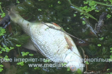 Риба у парку Топільче вимерла від нестачі кисню (Відео)