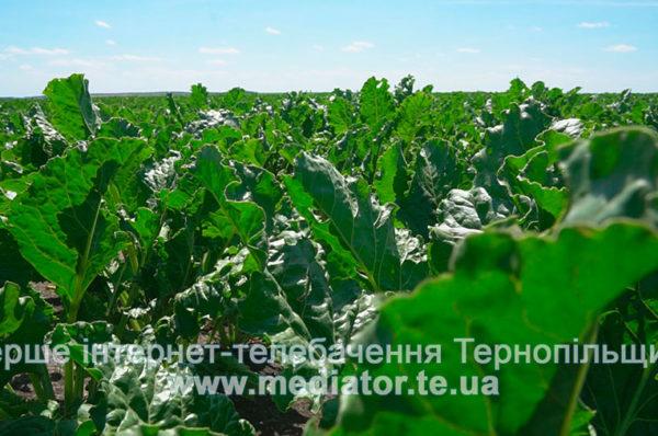 На Шумщині фермерське господарство самовільно зайняло понад 50 га землі