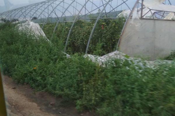 Зірвані дахи та понищені теплиці: на Тернопільщині вирувала гроза (Відео)