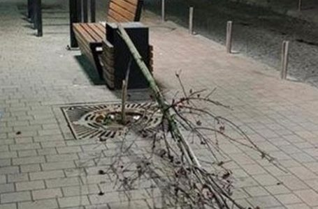 Вчепився, щоб не впасти: дерево на вул. Чорновола зламав 44-річний тернополянин