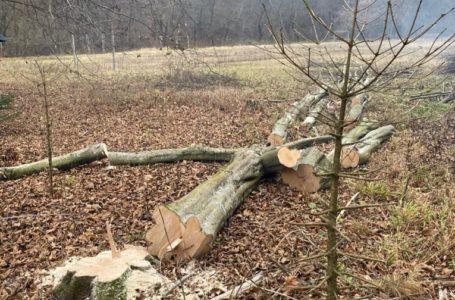 У заповідній зоні в Бучацькому районі незаконно вирубують дерева