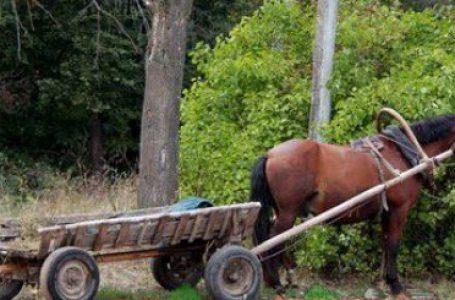 Коня з підводою викрав нетверезий односелець у жителя Тернопільщини