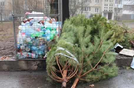 Залишати сухі новорічні ялинки біля сміттєвих баків просять тернополян
