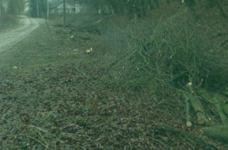 Збитки від незаконної вирубки лісу на Зборівщині сягають 260 тисяч гривень