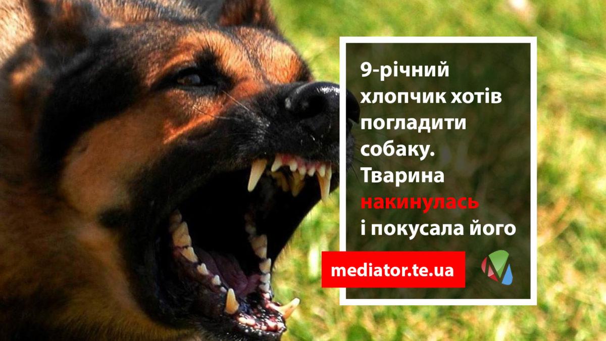 У Тернополі вихованця дитбудинку покусав собака, хлопчика оперуватимуть