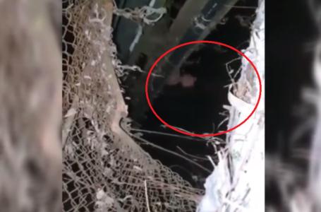 """У Тернополі в парку """"Топільче"""" двоє хлопців врятували з води бабусю (Відео)"""