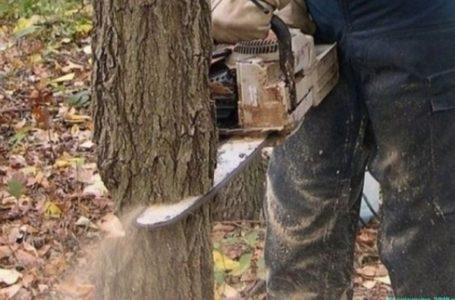 У Кременецькому районі чоловіка вбило дерево