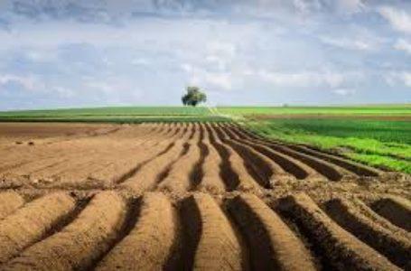 """""""Продаж землі в умовах економічної кризи – злочин проти народу"""", – Петро Ландяк"""