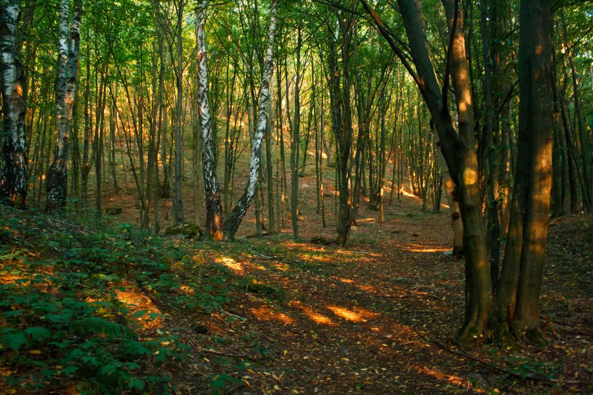 Жителям Тернопільщини заборонили відвідувати ліси