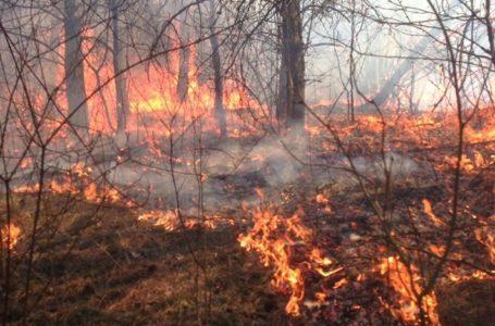 «Ви так нещадно випалюєте трави!»: рятувальники звернулись до жителів Тернопільщини (Відео)