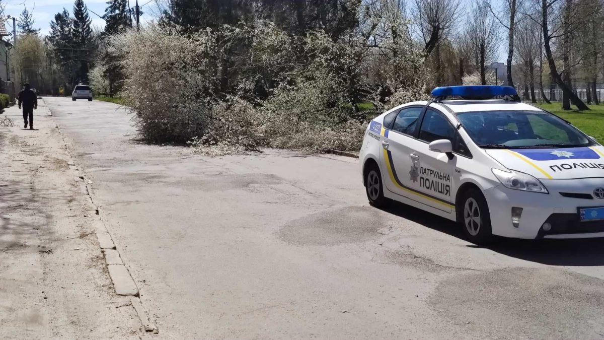 На вул. Білецькій у Тернополі вітер повалив дерево (Фото)