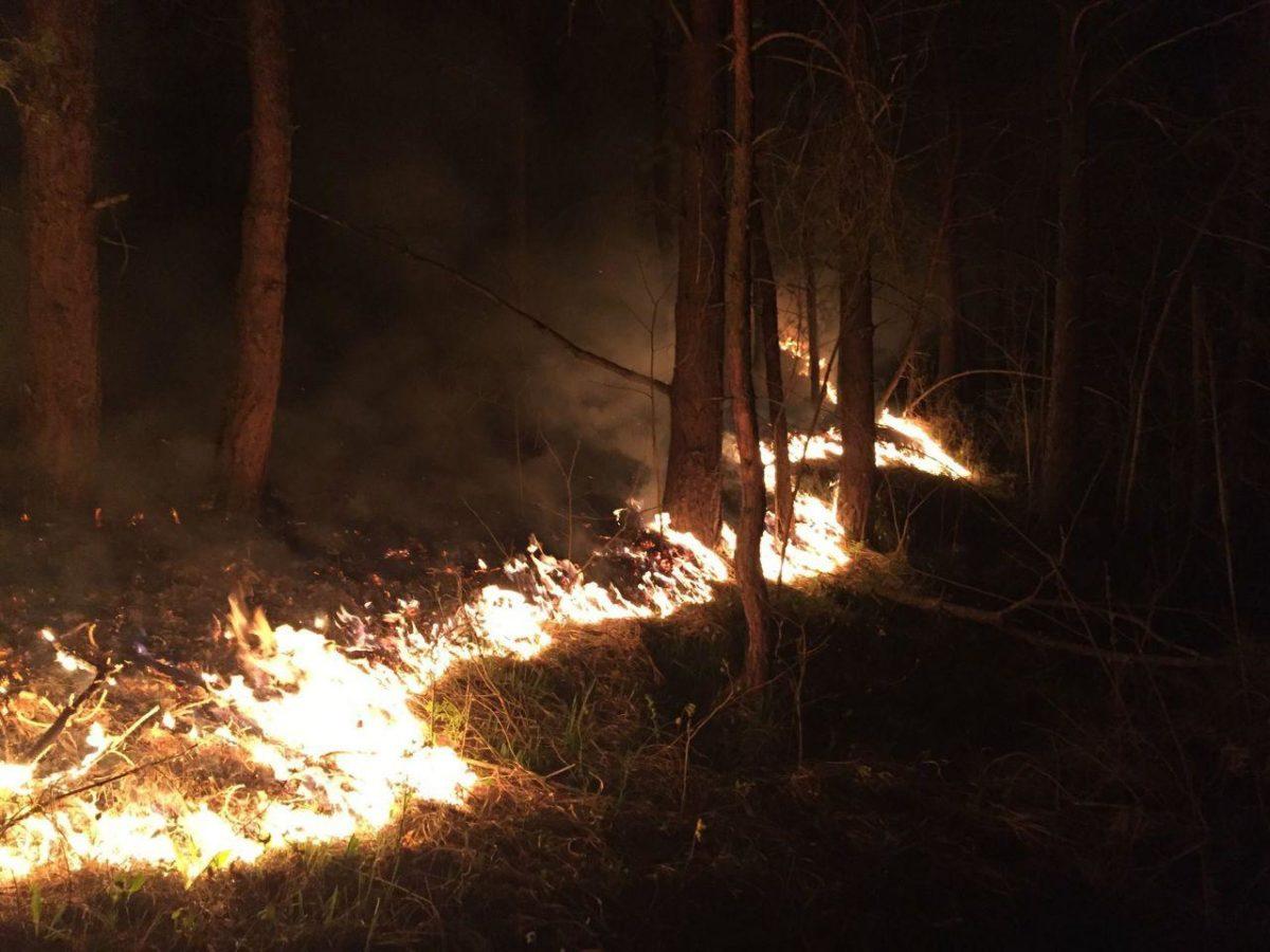 На Великдень під час пожежі на Монастирищині врятували ліс