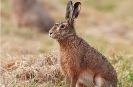 Тернополянина покарали за цинічне полювання на зайця (Відео)