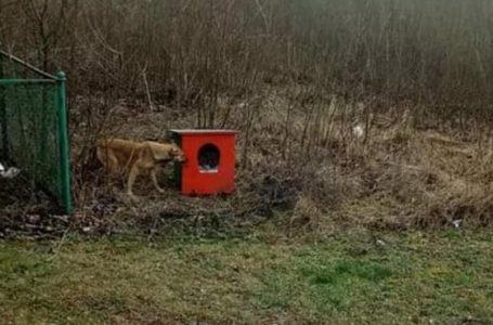 «Тварини спали на землі»: у Чорткові вкрали собачі будки, які придбали волонтери