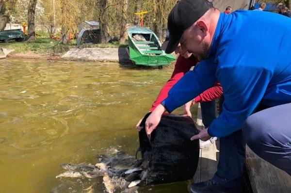 У Тернопільський став випустили дві тони риби (Відео)