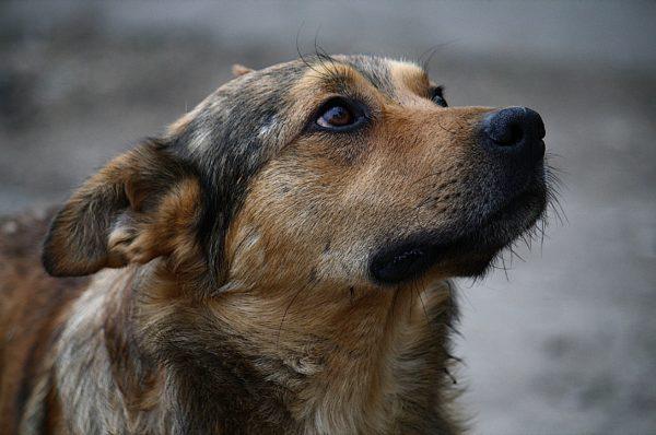 У Тернополі нарахували понад півтисячі безпритульних собак
