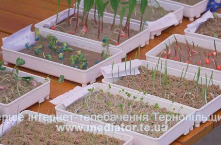Рослинництво зсередини: на тернопільських наукових пікніках показали як ростуть злаки (Відео)