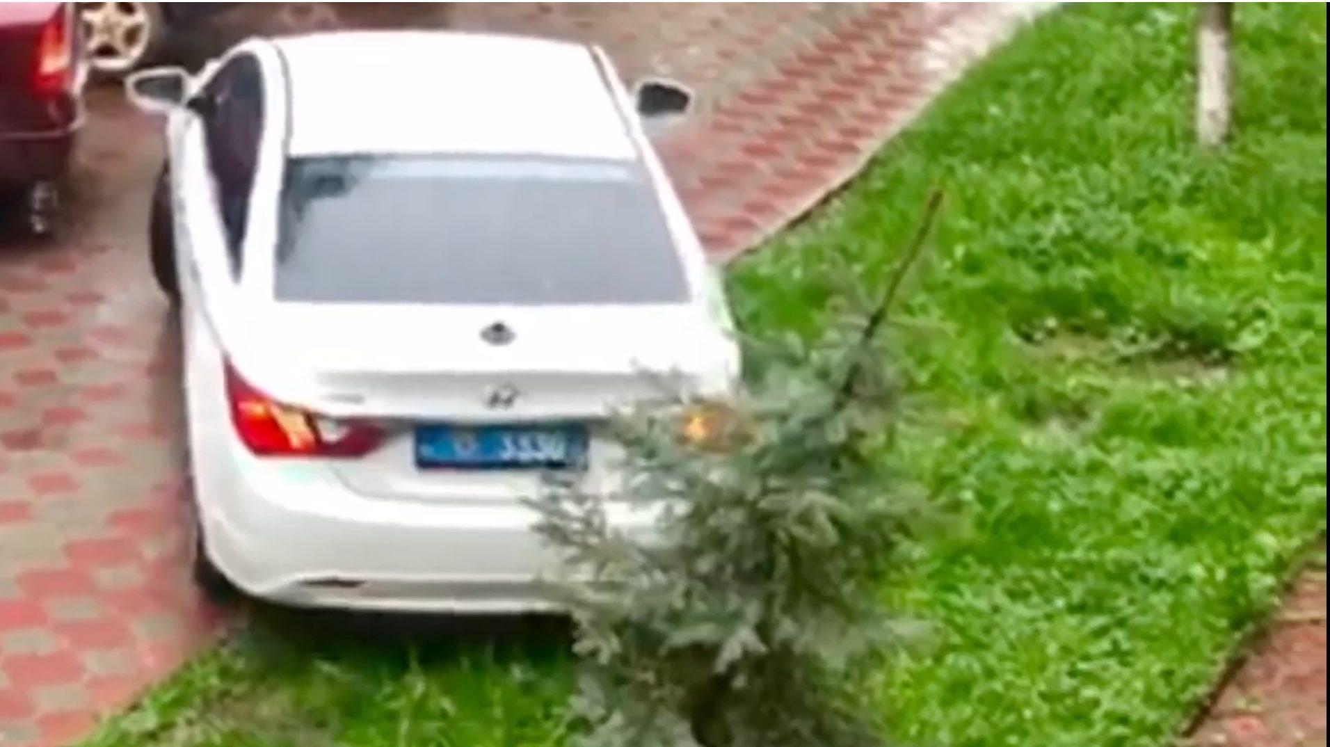 У Тернополі водій на поліцейському авто виїхав на газон і знищив деревце (Відео)