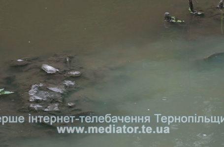 У Теребовлі всі фекалії з міста спускають в річку (Відео)