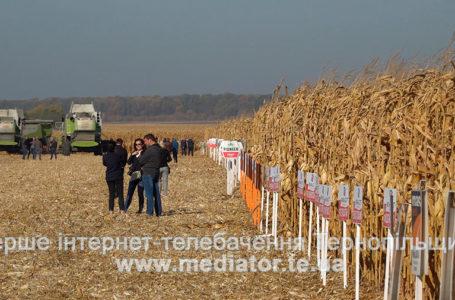 На Західноукраїнському чемпіонаті визначили кращі гібриди кукурудзи та цукрового буряка (Відео)