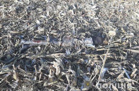 На Тернопільщині в кукурудзяному полі знайшли муміфіковане тіло людини